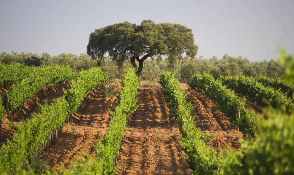 Wijngaarden in de Alentejo Herdade Dos Grous