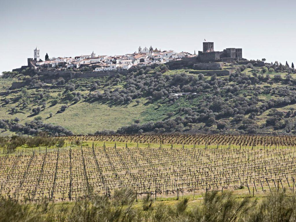 Wijngaarden in de Alentejo wijnhuizen