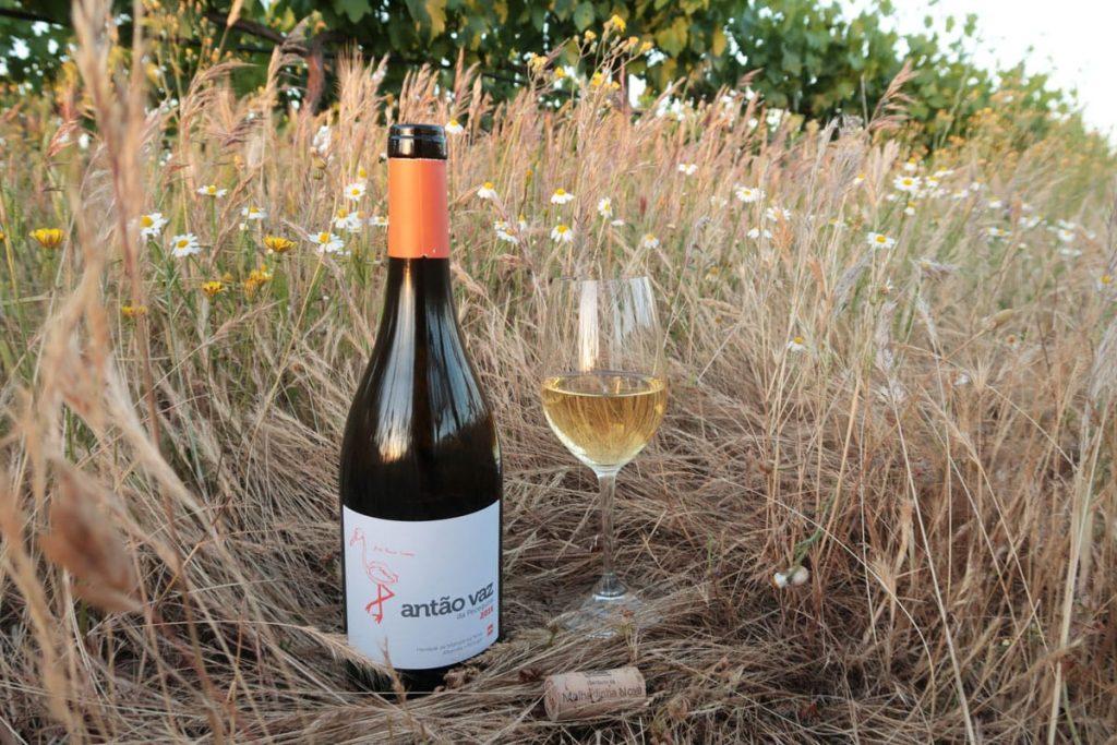 Wijnen in de Alentejo wijnreis